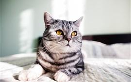 Желтые глаза кошка, серые полосы, кровать