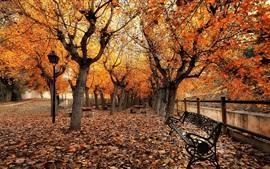 Otoño, parque, árboles, hojas, banco