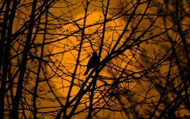 Bird in tree, twigs, silhouette, dusk