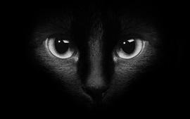 Cara de gato preto, olhos, escuridão