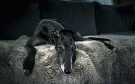 Cachorro preto, conforto, cama