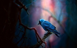 Preview wallpaper Blue feather bird, forest
