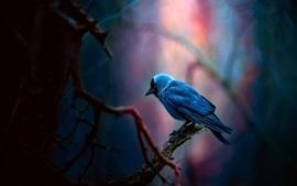 Pássaro de penas azuis, floresta