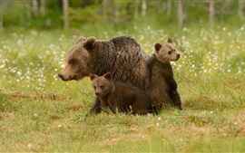 Preview wallpaper Brown bears family, cub, wildflowers