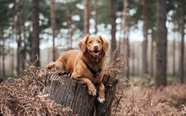 Perro marrón descansa en tocón