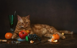 Preview wallpaper Cat and fruit, grapes, tangerines, apples