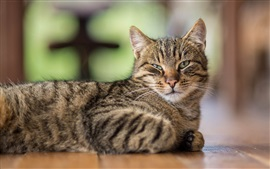 Vista lateral de gato, descanso, olhos