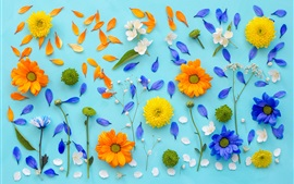 Preview wallpaper Chrysanthemum, petals, yellow flowers, blue background