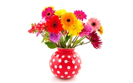 Colorful flowers, gerbera and dahlias, red vase, white background