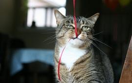 Cute cat play ribbon