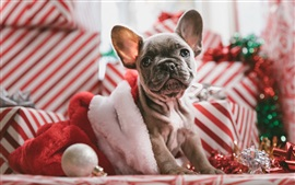 Cute dog sit on sofa, Christmas theme