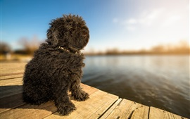 Preview wallpaper Cute furry black puppy, pond