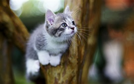 Cute kitten look, tree, bokeh