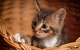 Preview wallpaper Cute kitten, paw, basket