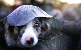 Preview wallpaper Dog, face, leaf, funny
