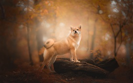 Dog look back, forest, autumn