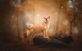 犬の背中、森、秋