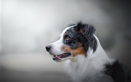 Vista lateral del perro, peludo, bokeh