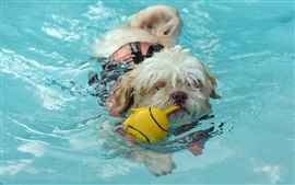 Preview wallpaper Dog swimming in water