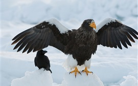Орел, крылья, снег