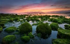 Soir, coucher de soleil, pierres, mousse, mer