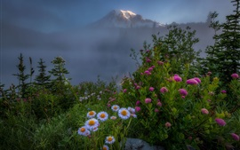 Preview wallpaper Flowers, white and pink, mountain top, fog, morning