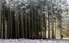 Forest, snow, winter, man, sunshine, morning