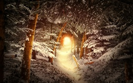 Bosque, árboles, nieve, agujero, resplandor