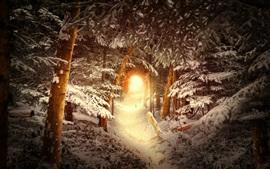 Лес, деревья, снег, дыра, блики