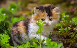 Пушистый котенок смотрит на зеленые растения