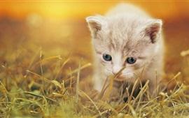 Пушистый котенок гуляет по траве