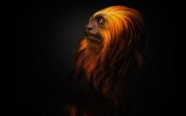 Macaco peludo, fundo preto