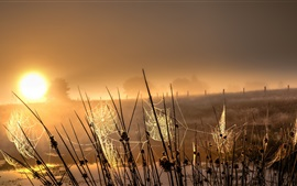 Preview wallpaper Grass, spider web, sunrise, fog, morning