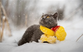 Preview wallpaper Gray cat, snow, winter, scarf