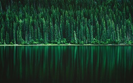 Preview wallpaper Green forest, river, nature