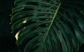 緑の葉、闇