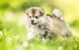 Preview wallpaper Happy puppy, grass, summer