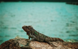 Preview wallpaper Iguana, stone, sea