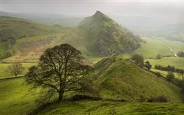 산, 녹색, 나무, 도로, 안개, 아침