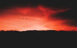 Night, sunset, red sky, birds flight