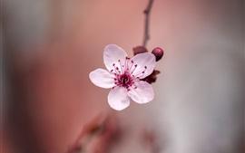 Primer plano de una flor rosa, primavera