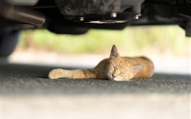 Orange cat sleep under car