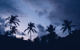 Preview wallpaper Palm trees, dusk, silhouette