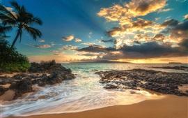 Palm trees, sea, clouds, beach, sunset
