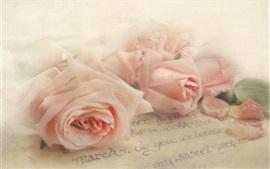 Rosas cor de rosa, carta, textura