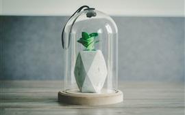 Plantas, botella, protegido