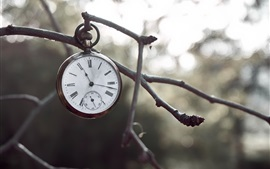 Preview wallpaper Pocket watch, twigs