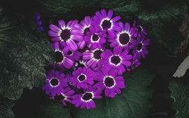 Purple flowers bloom, petals, leaves