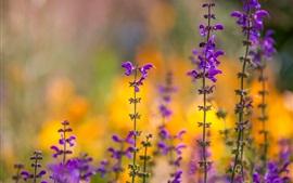 Flores de color púrpura, primavera, bokeh