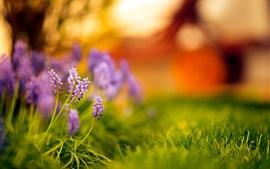 Purple little flowers, green grass